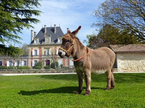 Chateau-Saint-Ahon-Haut-Medoc-Cru-Bourgeois-Gourmandises-en-medoc